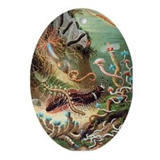 Marine worms, artwork Oval Ornament