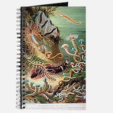 Marine worms, artwork Journal