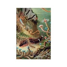 Marine worms, artwork Rectangle Magnet
