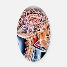 Internal brain anatomy, artwork Oval Car Magnet