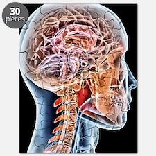 Internal brain anatomy, artwork Puzzle