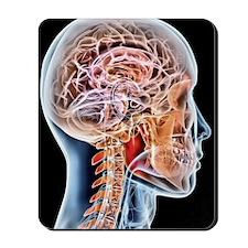 Internal brain anatomy, artwork Mousepad