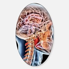 Internal brain anatomy, artwork Decal