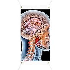 Internal brain anatomy, artwork Banner
