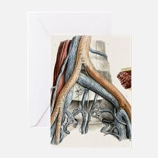 Iliac blood vessel nerves, 1844 artw Greeting Card