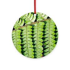 Male fern (Dryopteris filix-mas) Round Ornament