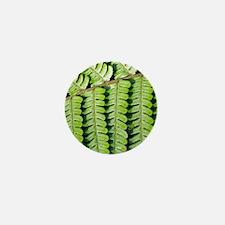 Male fern (Dryopteris filix-mas) Mini Button