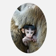 Long-tailed macaque baby Oval Ornament