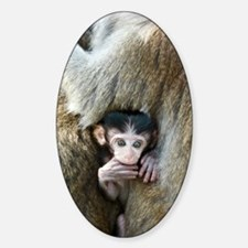 Long-tailed macaque baby Decal