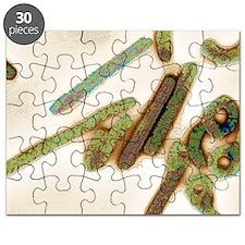 Marburg virus, TEM Puzzle