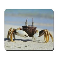Horned ghost crab Mousepad