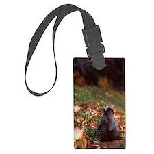 Hoary marmot Luggage Tag