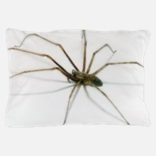 House spider Pillow Case