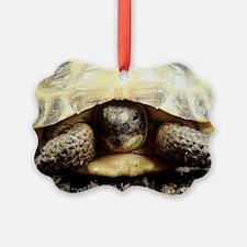 Horsfield tortoise Ornament