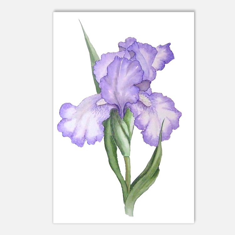 The Purple Iris Postcards (Package of 8)