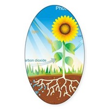 Photosynthesis, illustration Decal