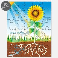 Photosynthesis, illustration Puzzle