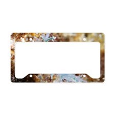 Nudibranch License Plate Holder