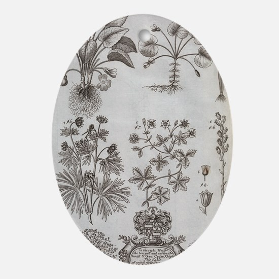 Oxfordshire plants, 18th century art Oval Ornament