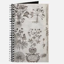 Oxfordshire plants, 18th century artwork Journal