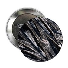"""Orthoceras fossils 2.25"""" Button"""