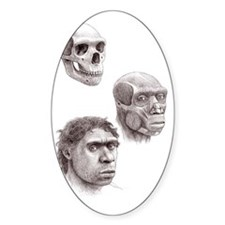 Neanderthal skull, muscles and head Decal