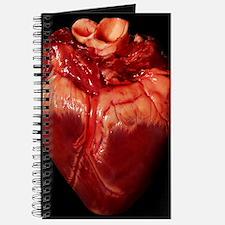 Pig's heart Journal