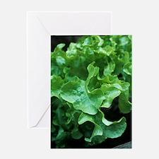 Organic lettuce (Lactuca 'Salad Bowl Greeting Card