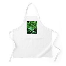 Organic lettuce (Lactuca 'Salad Bowl') Apron