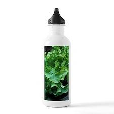 Organic lettuce (Lactu Sports Water Bottle