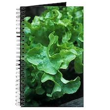 Organic lettuce (Lactuca 'Salad Bowl') Journal
