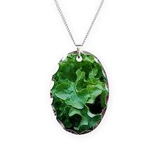 Organic lettuce (Lactuca 'Sala Necklace Oval Charm
