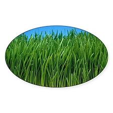 Organically grown wheat grass, Trit Decal