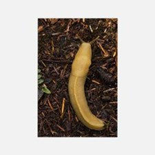 Pacific banana slug Rectangle Magnet
