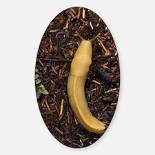Pacific banana slug Decal