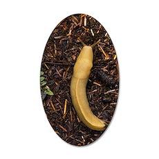 Pacific banana slug 35x21 Oval Wall Decal
