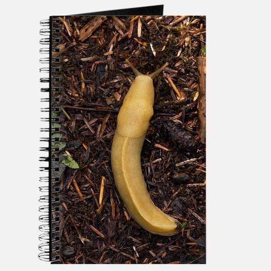 Pacific banana slug Journal