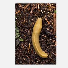 Pacific banana slug Postcards (Package of 8)