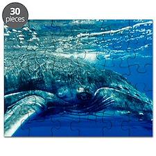 Humpback whale Puzzle