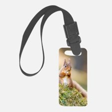 Red squirrel feeding Luggage Tag