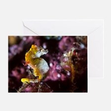 Pontohi pygmy seahorse Greeting Card