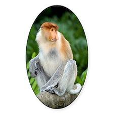 Proboscis monkey Decal