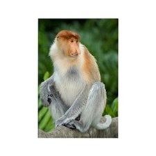 Proboscis monkey Rectangle Magnet