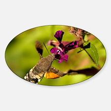 Hummingbird hawk-moth Sticker (Oval)