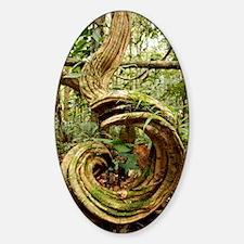 Rainforest undergrowth Sticker (Oval)