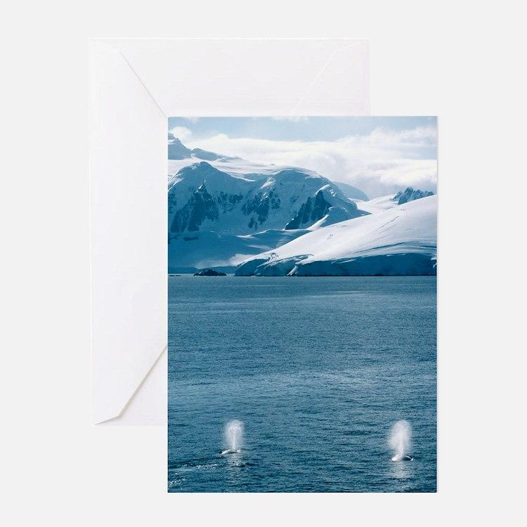 Humpback whales exhaling Greeting Card