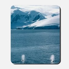 Humpback whales exhaling Mousepad