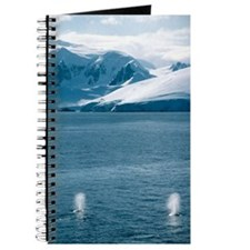 Humpback whales exhaling Journal