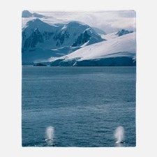 Humpback whales exhaling Throw Blanket