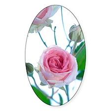 Spray rose (Rosa 'Mimi Eden') Decal